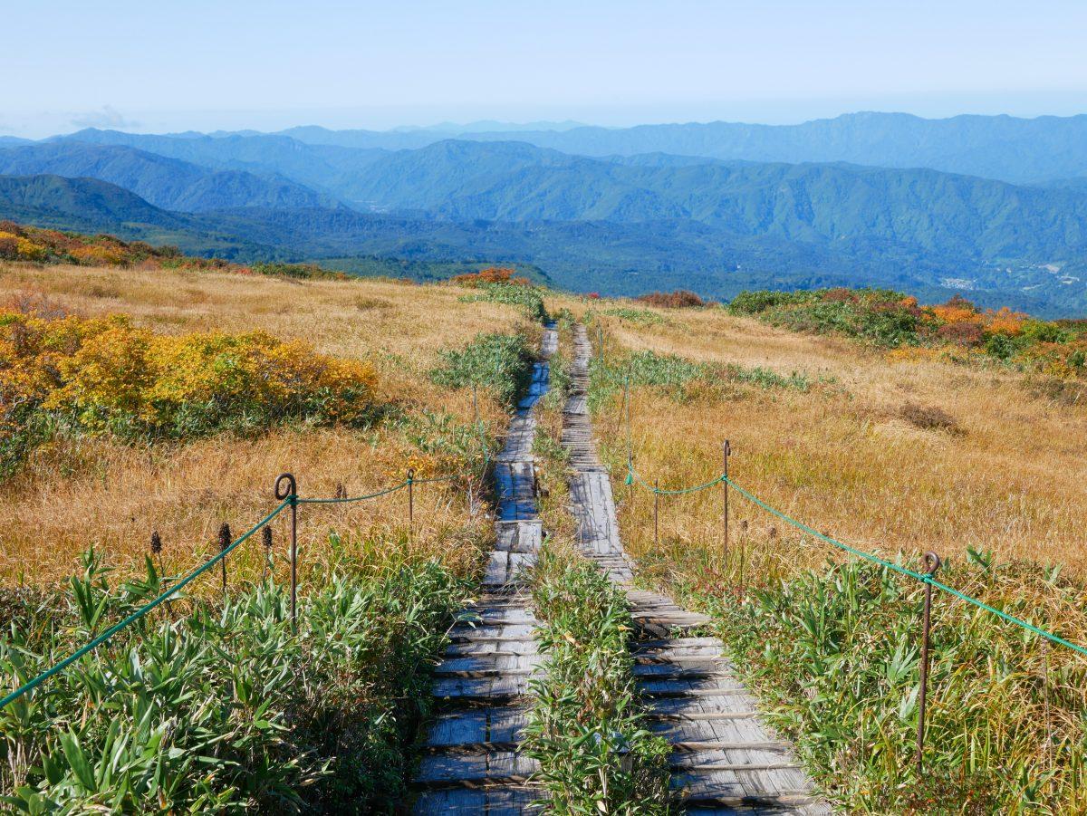 月山 弥陀ヶ原の湿原